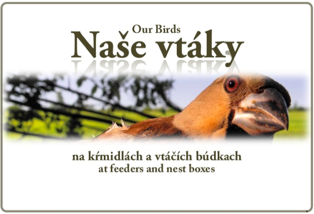 Naše vtáky na kŕmidlách a vtáčích búdkach prezentácia